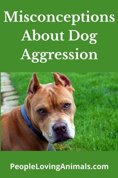 Misconceptions About Dog Aggression, dog aggression tips, dog aggression myths, dog aggression mistakes, aggressive dogs, stop dog aggression, help dog aggression, dog aggression training, Dog Training Leash Training, Dog Training Videos, Training Your Dog, Aggressive Dog, Dog Barking, Pet Lovers, How To Train Your, Pet Care, Dog Cat