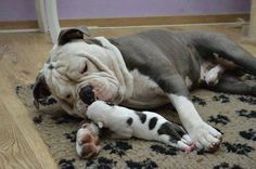 ❤ Mom & wee one ~ bonding. ❤ Posted from Rebel Bully's in Swalmen, Netherlands.