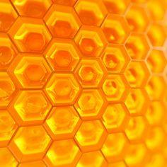 ハチ由来食品