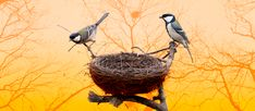 """""""Birdnesting: The Pros and Cons"""" for The Plum Coparenting, After Divorce, Plum, Interview, About Me Blog"""