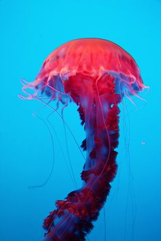 Monterey Bay Aquarium - (CC)l.conti - www.flickr.com/photos/tr8la/2796162258/in/photostream#