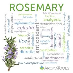 Rosemary (Rosmarinus officinalis) essential oil is steam-distilled from the flowering rosemary plant. It is known for its herbaceous, strong, camphoraceous odor, with woody-balsamic and evergreen u… Essential Oils For Pain, Essential Oil Diffuser Blends, Essential Oil Uses, Young Living Essential Oils, Marjoram Essential Oil, Doterra Rosemary, Rosemary Plant, Young Living Oils, Oil Benefits