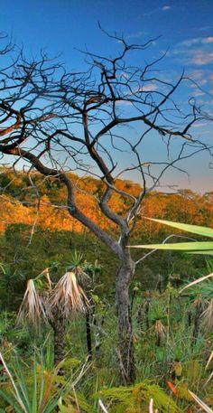 """Nature Brazil - National Park """"Chapada dos Veadeiros"""" - paisagem cerrado ( landscape brazilian's ecosystem - cerrado. )"""