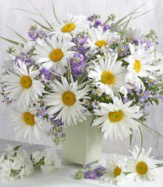 Marianna Lokshina - Flowers_LMN39205
