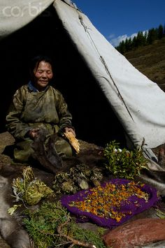 Tsaatan (Dukha) Reindeer Nomads. A Dukha medicine woman displays her apothecary of healing flowers and plants. Living far from modern medical facilities, the Dukha still rely on many traditional remedies. Mongolia
