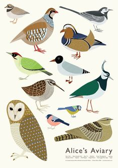 Alice's Aviary, very colorful bird art poster. For he birdwatchers in your life. By Alice Melvin.