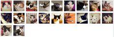 猫たちと一緒にお待ちして居ます 東京で猫のための小さなお家 「シェルターで暮らす、新しい飼い主さんを待つ猫たち」をお迎えに行ってあげてください【ソックスちゃん・足立君・北葛西ちゃん・マルコス・謙治君・陸君・ペコちゃん・チャコちゃん・歌舞伎ちゃん・カール君・両国・サビィ・国分(こくぶ)・涼真(りょうま)・ももちゃん・かすみちゃん・楓ちゃん・ロッシーちゃん・セイン君・杏ちゃん・大島ちゃん・いろは】 ≪連絡先書いておきますので一度話聞いてもいい人はよろしくお願いします≫P.S ちゃんといい子で居ますので末永くお待ちしてます