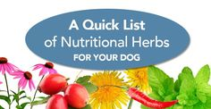 Try These Nutritional Herbs For Your Dog