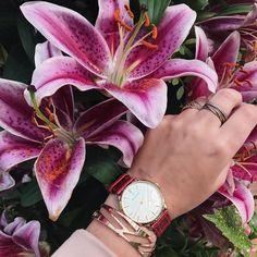 1,349 vind-ik-leuks, 39 reacties - Wendy Van Soest (@wendyvsoest) op Instagram: 'Always in time with @renardwatches 🌸 #renard #pandora #keukenhof #holland #watch #instamood…'