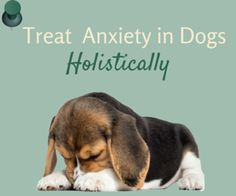 Natural Remedies For Anxiety In Older Dogs