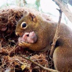 mom & baby squirrel