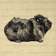 Pet Guinea Pig Graphic Image Digital Illustration Download