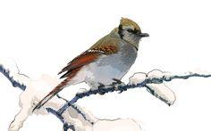 watercolor, bird, snow, Bagi Laszlo Jr.