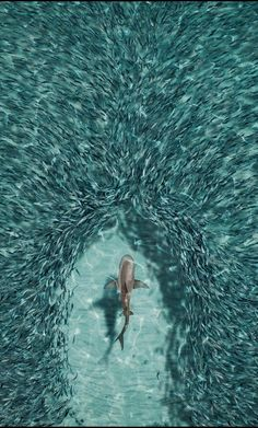Shark Wallpaper for iPhone and Android Tier Wallpaper, Ocean Wallpaper, Animal Wallpaper, Shark Wallpaper Iphone, Beautiful Sea Creatures, Animals Beautiful, Cute Animal Photos, Ocean Creatures, Ocean Life