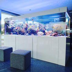 Cichlid Aquarium, Reef Aquarium, Beautiful Tropical Fish, Beautiful Fish, Home Aquarium, Aquarium Design, Saltwater Tank, Saltwater Aquarium, Nano Reef Tank