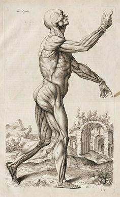Albrecht Durer   (Attack on Titan >.<  )