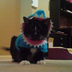 Need to make this for Liz's cat!