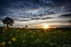 Very interesting sunset photograph of landscape and sunset shoot in HDR Urban Landscape, Landscape Photos, Amazing Sunsets, Long Exposure, Landscape Photographers, Hdr, Yellow Flowers, Beautiful Landscapes, Netherlands