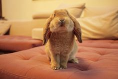 Would you like to sit next to me? #bunny #rabbit