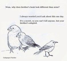 Image result for booby bird puns