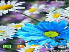 Daisies By Live Wallpapers 3D  Android App - playslack.com , Daisies by Live Wallpapers 3D - pretty daisies on the screen of your smartphone or tablet PC. app reacts taps, has a water surface phenomenon, drops of precipitation and others.