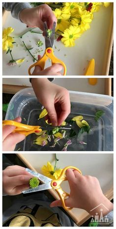 Invite your pre-schooler to practise their cutting skills on a bunch of fragrant fresh flowers. This is a great activity to work fine motor skills as well. Added water play at the end lead to lots of mixing, stirring, pouring and scooping fun.