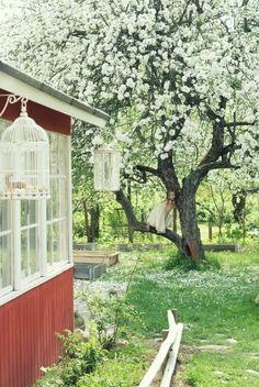 Omppupuun alla - Ruususuu ja Huvikumpu - Kodin Kuvalehti