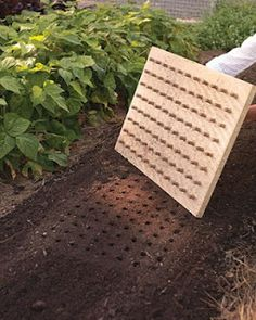 Planting Board - Wine corks stuck to a piece of wood makes a dibble for even seed planting.