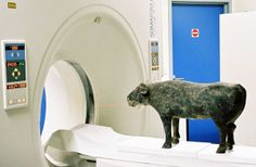 A 28-inch hollow terra-cotta buffalo from China's Han dynasty (206 BC-220 AD) goes through a CT scanner.