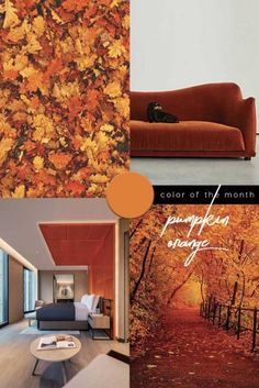 Color Trend 2020 Pumpkin Orange in interiors and design Green Painted Walls, Orange Palette, Orange Interior, Colorful Interiors, Design Interiors, Interior Design, Color Of The Year, Pantone Color, Color Trends