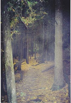 BRUCE TRAIL PENINSULA SECTION by UNDER THE CAMPHOR, via Flickr