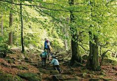 Durch den Wald geht es steil hinauf Richtung Räuber-Heigl-Höhle.