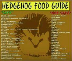 ~Hedgehog Food Guide~