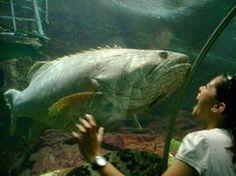 underwater world 11