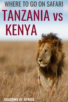 5 Differences Between Tanzanian & Kenyan Safaris - Travel to Africa