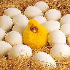 Baby Chick Print By Anne Geddes