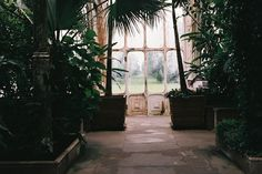 wondering if this is in the large greenhouse in kew gardens. very nostalgic for london.