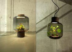 Mygdal Plantlamp. La lámpara con un ecosistema completamente autosuficiente en su interior.