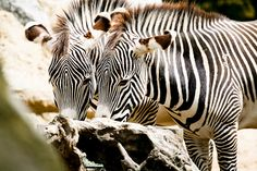 Top Tips for Taking Photos at the Zoo