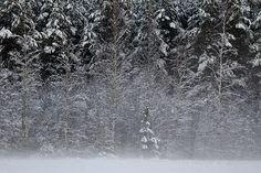 Talvi, sumu, Nurmo