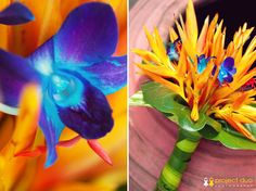 Tropical birds of paradise and dendrobium orchids.