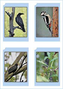 Haltia | Linnut | Tulostettavat lintukortit | Korttisarja esittelee 17 tyypillistä metsälintulajia valokuvin ja tekstein. Tekstit ovat sekä suomeksi että ruotsiksi. Materiaalin on tuottanut Suomen luontokeskus Haltia. Voi käyttää yhdistelupelinä -> Yhdistä kuvakortti ja tietokortti | Bird Picture Card | Free printable PDF