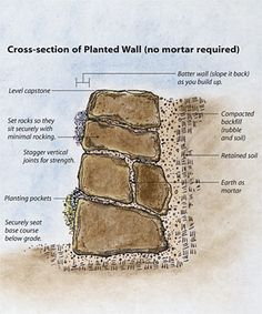 Build a Dry-Stacked Stone Retaining Wall. A stone wall assembled without mortar has a lot of crevices to plant in http://www.finegardening.com/how-to/articles/dry-stacked-stone-retaining-wall.aspx