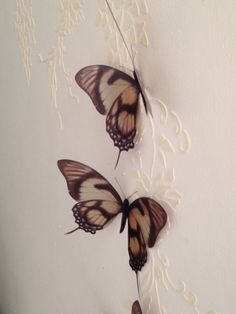 4 Luxury Amazing Cream Brown in Flight  by MyButterflyLove on Etsy