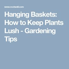 Hanging Baskets: How to Keep Plants Lush - Gardening Tips