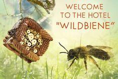 Im Frühling ein Wildbienenhaus bauen und damit dem Artenschutz helfen. Wir haben eine einfache Bauanleitung und interessante Wildbienenfakten.