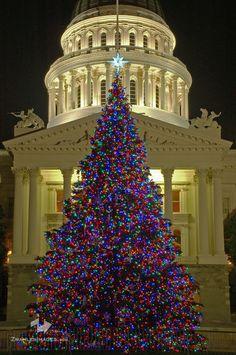 Capitol Christmas Tree, Sacramento, California