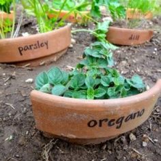 Use clay pots to label plants