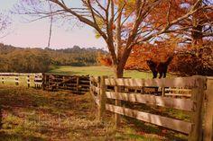 Beautiful Autumn afternoon on the farm.