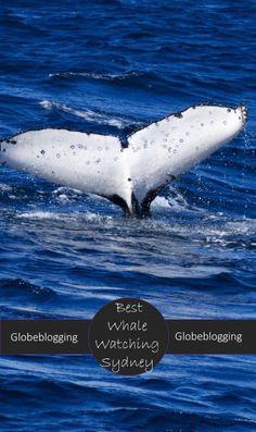 Cruise the Humpback Highway; best whale watching Sydney ~ Globeblogging